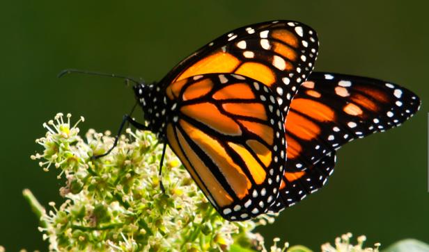 El pabellón que albergará las especies nativas de California estará abieryo del 12 de abril al 7 de septiembre.